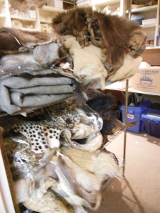 Animal skins waiting to be cataloged at the Columbus Zoo's library