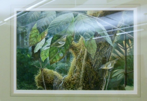 Painting of Vireo masteri presented to Bernard Master