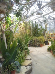 Cacti and succulents at Ohio State's Biological Sciences Greenhouse