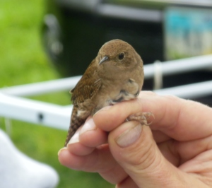 Bird banding at the Grange Insurance Audubon Center