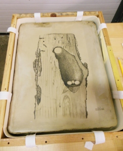 Lithograph stone for Downy Woodpecker, Plate LVI of the Illustrations of the Nests and Eggs of Birds of Ohio H 85078, Ohio Historical Society