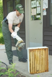 Sharon Woods ranger smoking the hive box
