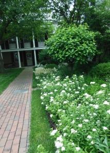 White-blooming garden, Taft Museum