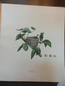 Plate XV, Illustrations of the Nests and Eggs of Birds of Ohio, Ohio Historical Society Archives/Library