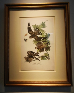 Audubon's Night Hawk, first edition octavo, on display at Hawk Galleries