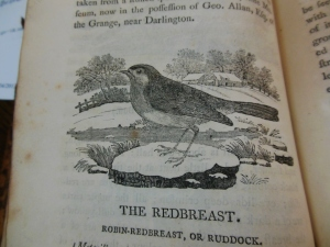 Robin-Redbreast, History of British Birds, by Thomas Bewick, Ohio Historical Society Archives/Library