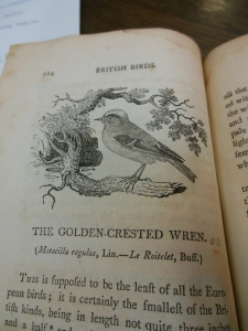 The Golden-crested Wren, History of British Birds, by Thomas Bewick, Ohio Historical Society Archives/Library