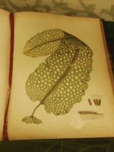 Plate from Nereis Boreali-Americana, Lloyd Library