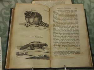 Raccoon and American pole cat from Pehr Kalm's Travels into North America, Lloyd Library