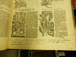 Jean-Jacques Rousseau's annotations in his copy of Omnium Stirpium Sciagraphia et Icones, Lloyd Library