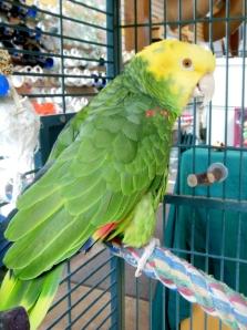 Malabar Farm's parrot