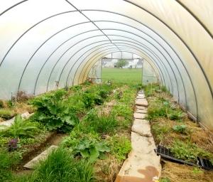 Greenhouse, Shepherd's Corner, Blacklick