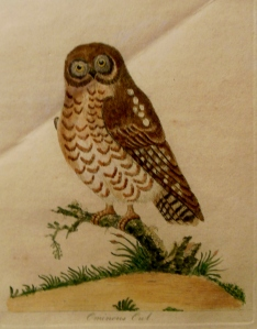 John Latham's Ominous Owl, In Fine Feather, Toledo Museum of Art