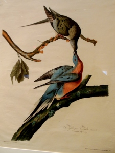 John James Audubon's Passenger pigeons, In Fine Feather, Toledo Museum of Art