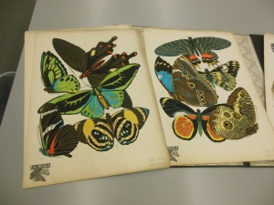 Images from Eugene Alain Seguy's Papillons, Fine Arts Library, Ohio State University