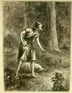 "From ""Johnny Appleseed: A Pioneer Hero,"" W.D. Haley's 1871 article in Harper's New Monthly Magazine"