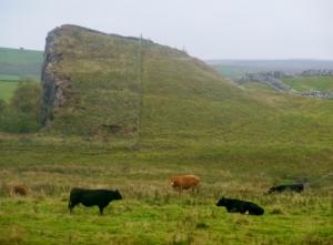 Cawfields