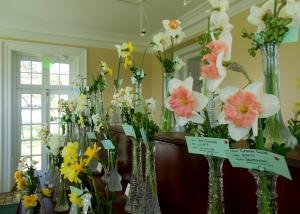 Granville Daffodil Show
